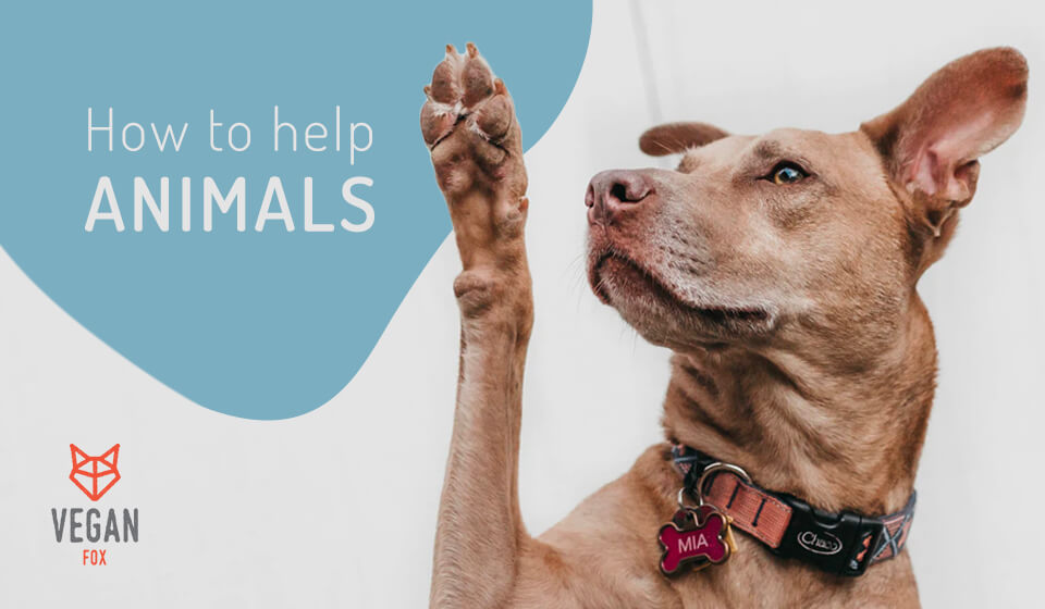 how to help animals